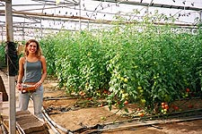 Israeli Farmer in Greenhouse