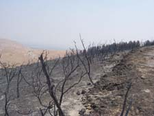 Pr burnt trees